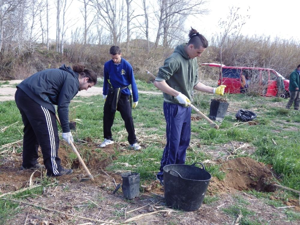Crònica: Plantàrem més de 100 arbres junt al riu Túria... (3/6)